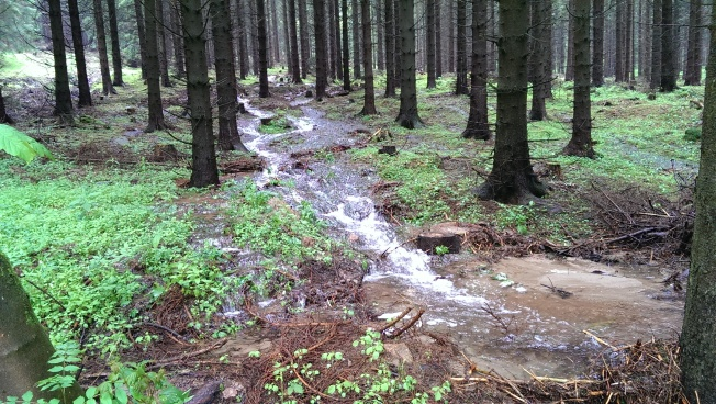 Overland flow in a forest, June 2013